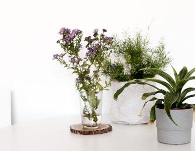 Wnętrza EKO – rośliny